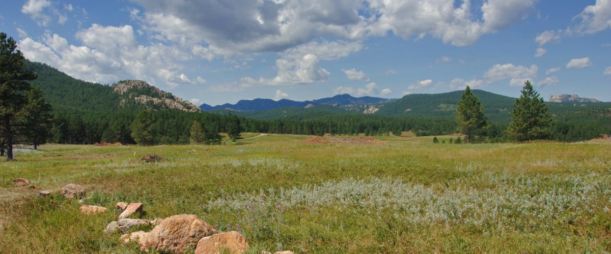 Meadow in the Black Hills of South Dakota. Mt Rushmore is in the distance on the right.
