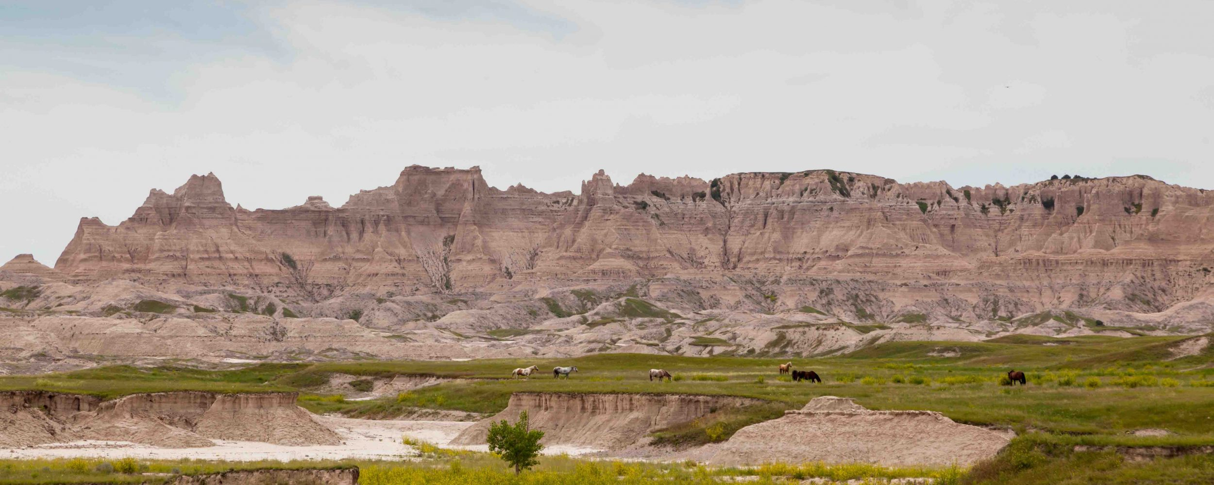 Seven horses in a green field below the dynamically carved mountains of the Badlands in South Dakota.